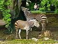 Tierpark München 2014 125.JPG