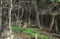 Tierra del Fuego07(js).jpg