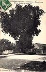 Tilleul de Pesselières.jpg