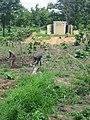 Togo agriculture.jpg