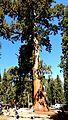 Tree - panoramio (50).jpg