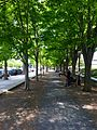 Tree Allée in front of Firestone Library.jpg