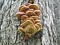 Tree Clump1mushrooms.jpg