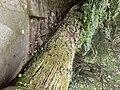 Tree Trunk (2).jpg