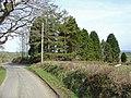 Trees near Nantbendigaid, Cynwyl Elfed - geograph.org.uk - 1207879.jpg