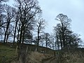 Treescape on the hillside - geograph.org.uk - 652410.jpg
