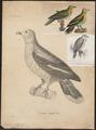Treron capellei - 1700-1880 - Print - Iconographia Zoologica - Special Collections University of Amsterdam - UBA01 IZ15600019.tif