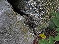 Triglav National Park (7893643510).jpg