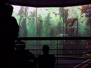 Two Oceans Aquarium - The main kelp forest tank in Two Oceans Aquarium