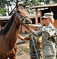U.S. Army Spc. Jenny Anderson, right, a combat medic with Joint Task Force Jaguar, administers a deworming medication to a horse at a Salvadoran cavalry base in San Salvador, El Salvador, April 21, 2013, during 130421-A-OM689-004.jpg