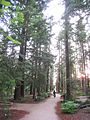 UC Davis arboretum - redwood grove 1.jpg
