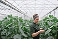 UFV - Agriculture Students Work Practicum (13997202535).jpg