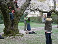 U Wash Quad cherry blossoms 11.jpg
