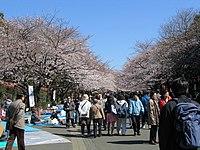 春天賞櫻的人群