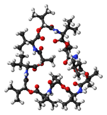 Ball-and-stick model of the valinomycin molecule