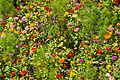Various flowers in Generalife gardens, Granada, Spain.jpg