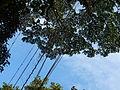Vegetación de la Reserva de la Biosfera La Amistad Panama (RBLAP) 38.JPG