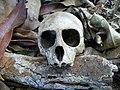 Vervet skull front Ilanda.JPG