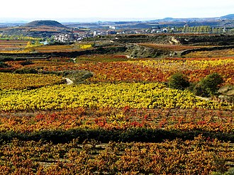 A vineyard in Rioja Vinedos en Brinas.jpg
