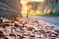 Viale Delle Mura Aurelie (193538715).jpeg