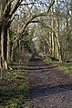 View along Green Walk - geograph.org.uk - 355920.jpg