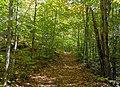 View east along Diamond Notch Trail, Spruceton, NY.jpg