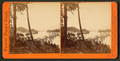 View on the Columbia River from the O.R.R. Cascades, by Watkins, Carleton E., 1829-1916 2.png
