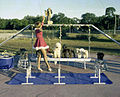 View showing a student with performing dogs of the Sarasota High School Sailor Circus.jpg