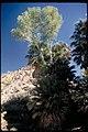 Views at Joshua Tree National Park, California (cb0daa7c-4fa7-458e-9a84-76b82055bd7f).jpg