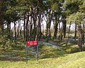 Vimy Memorial - Shell holes.jpg