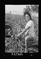 Vintage activities at Richon-le-Zion, Aug. 1939. Grape picker, close up study European immigrant girl LOC matpc.23302.jpg