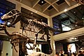 WLA hmns Tyrannosaurus rex 2.jpg