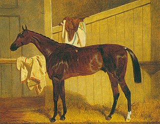 Warlock (horse) British Thoroughbred racehorse