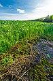 Water Lily Flower.jpg
