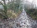 Waterlogged path, near Nethercott Barton - geograph.org.uk - 1134406.jpg