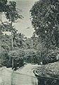Westafrikanische Nutzpflanzen (Busse) - Tafel 30 - Flussmündung bei Mokundange.jpg