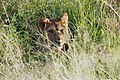Western Serengeti 2012 06 02 4128 (7557737914).jpg