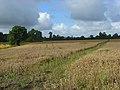 Wheatfield, Wheatfield - geograph.org.uk - 932724.jpg