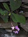 Whf purple 43.jpg