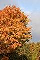 Wienerwald-Herbst 5438.JPG