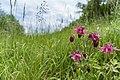 Wiki DSC00640 NSG Hemsberg Zell 1431010.jpg