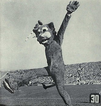 Willie the Wildcat (Northwestern) - Willie, c. 1961
