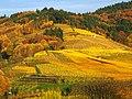 Wine - panoramio (1).jpg