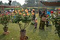 Winter Flower Show - Agri-Horticultural Society of India - Alipore - Kolkata 2013-01-05 2131.JPG