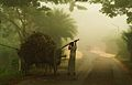 Winter Morning at Chalknazirpur Natore Bangladesh 3.JPG
