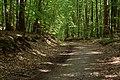 Woliński Park Narodowy Droga Żubrowa 2016-08-28 p.jpg