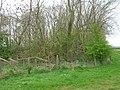 Woodland near Rudston Grange - geograph.org.uk - 1259716.jpg