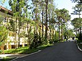 Yersin University of Da Lat 10.jpg