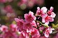 Yogi Park Naha Okinawa Japan03bs.jpg