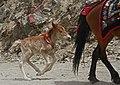 Yumbu Lagang-20-Pferd-Fohlen-2014-gje.jpg